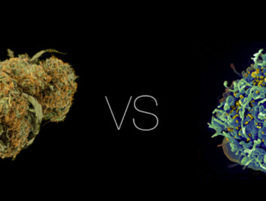Cannabis vs HIV/AIDS | Infographic