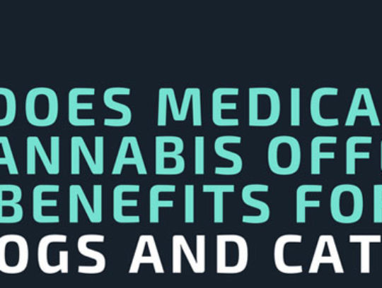 Does medical cannabis offer benefits for dogs and cats? | Infographic